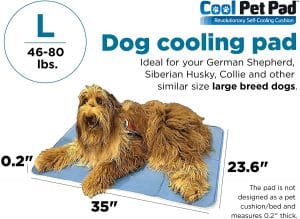 cooling dog bed reviews