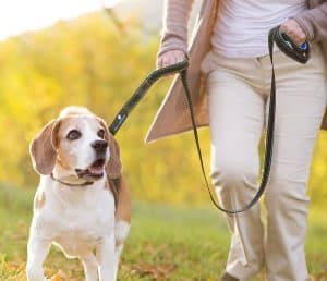 best dog leashes