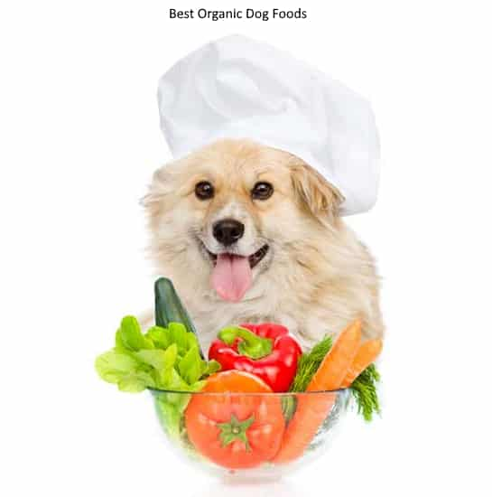 Best Organic Dog Foods