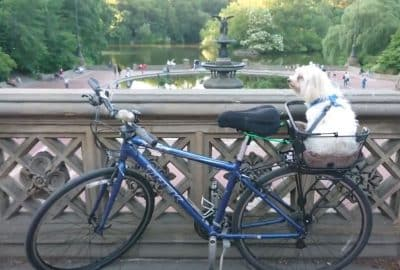 diy dog bike basket ideas