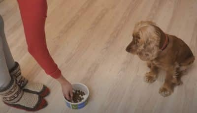how to make a dog gain weight