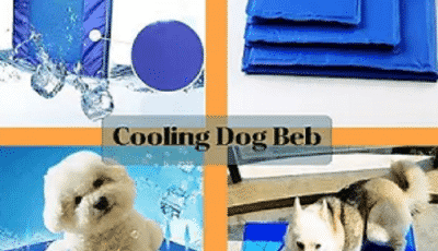 how to choose a cooling dog bed