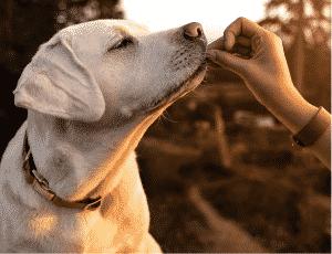 best low protein dog foods