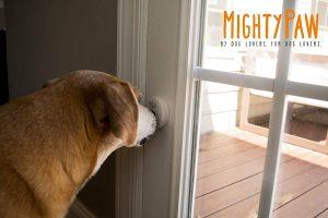 best dog barking doorbells