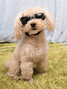 best anti fog dog goggles