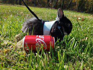 best-rabbit-harness