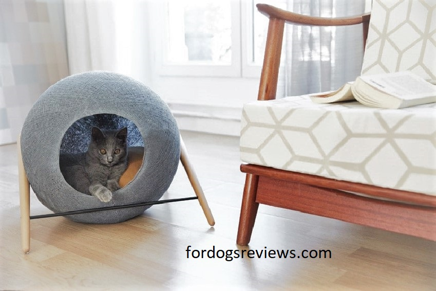 Best cat beds for kittens