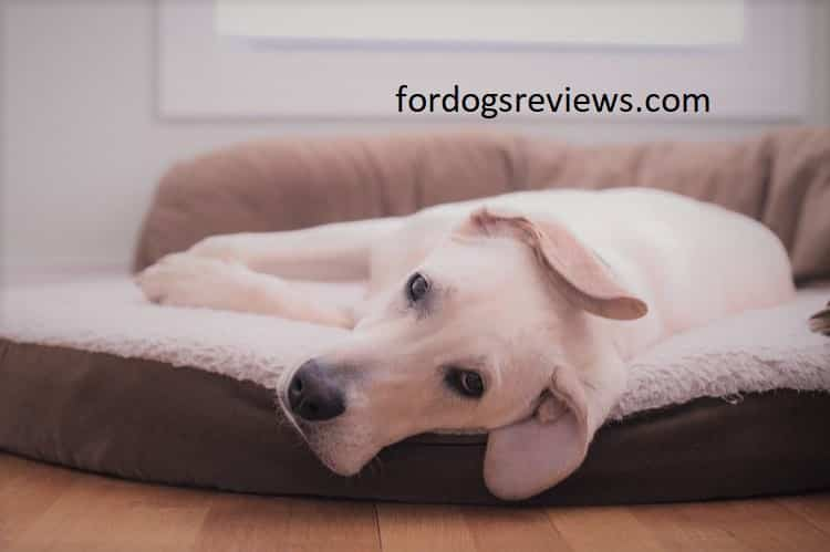 Best dog bed with covered top