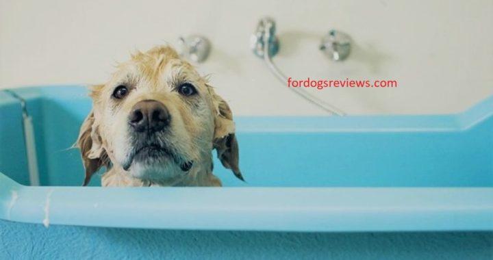 best dog bathing tub