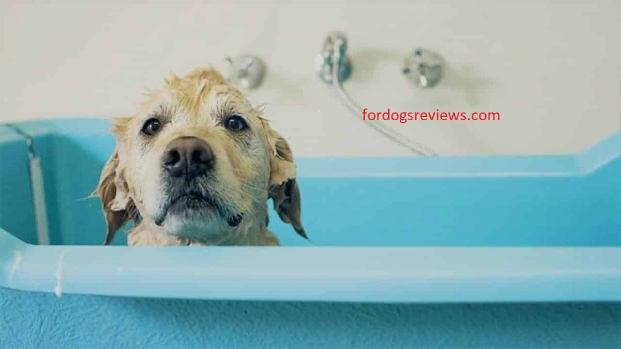 best dog bathing tub