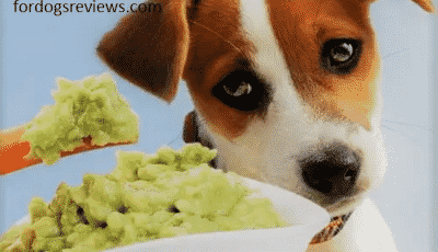 15 weird signs telling your dog is sick