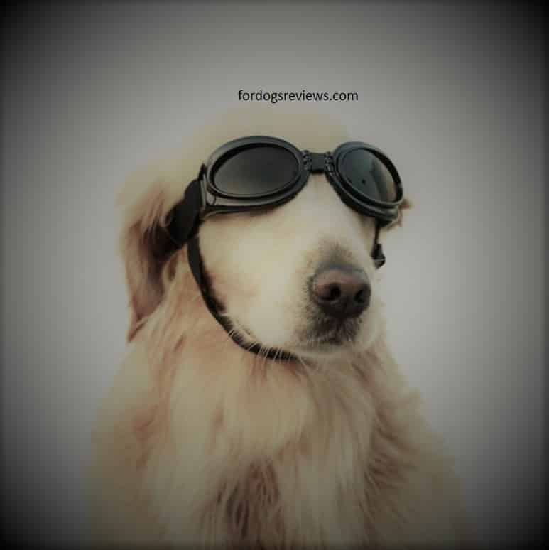 Best Anti-Fog Dog Goggles