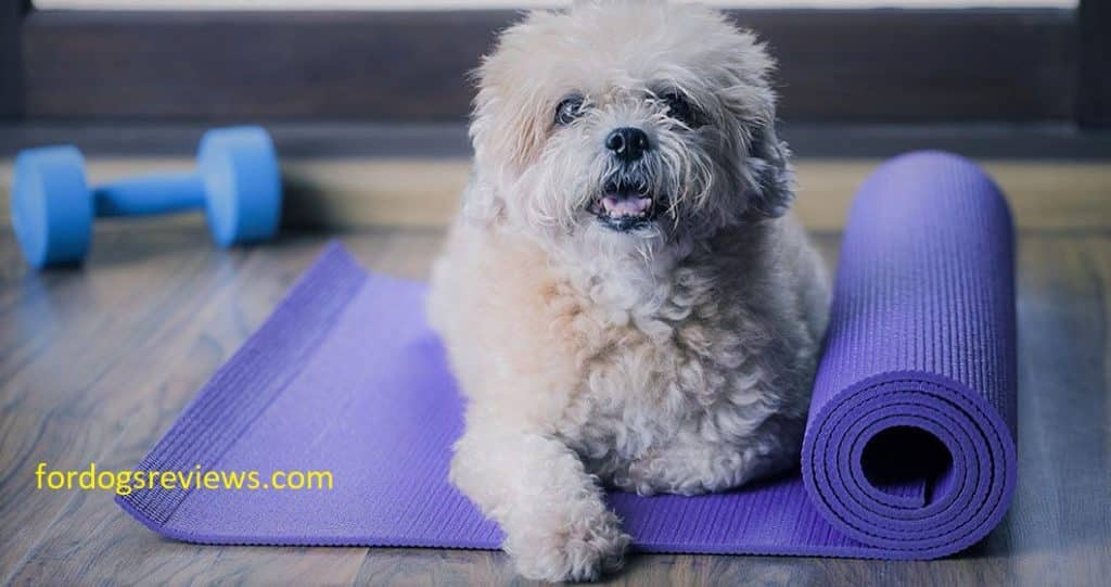 Best cooling pads for dogs