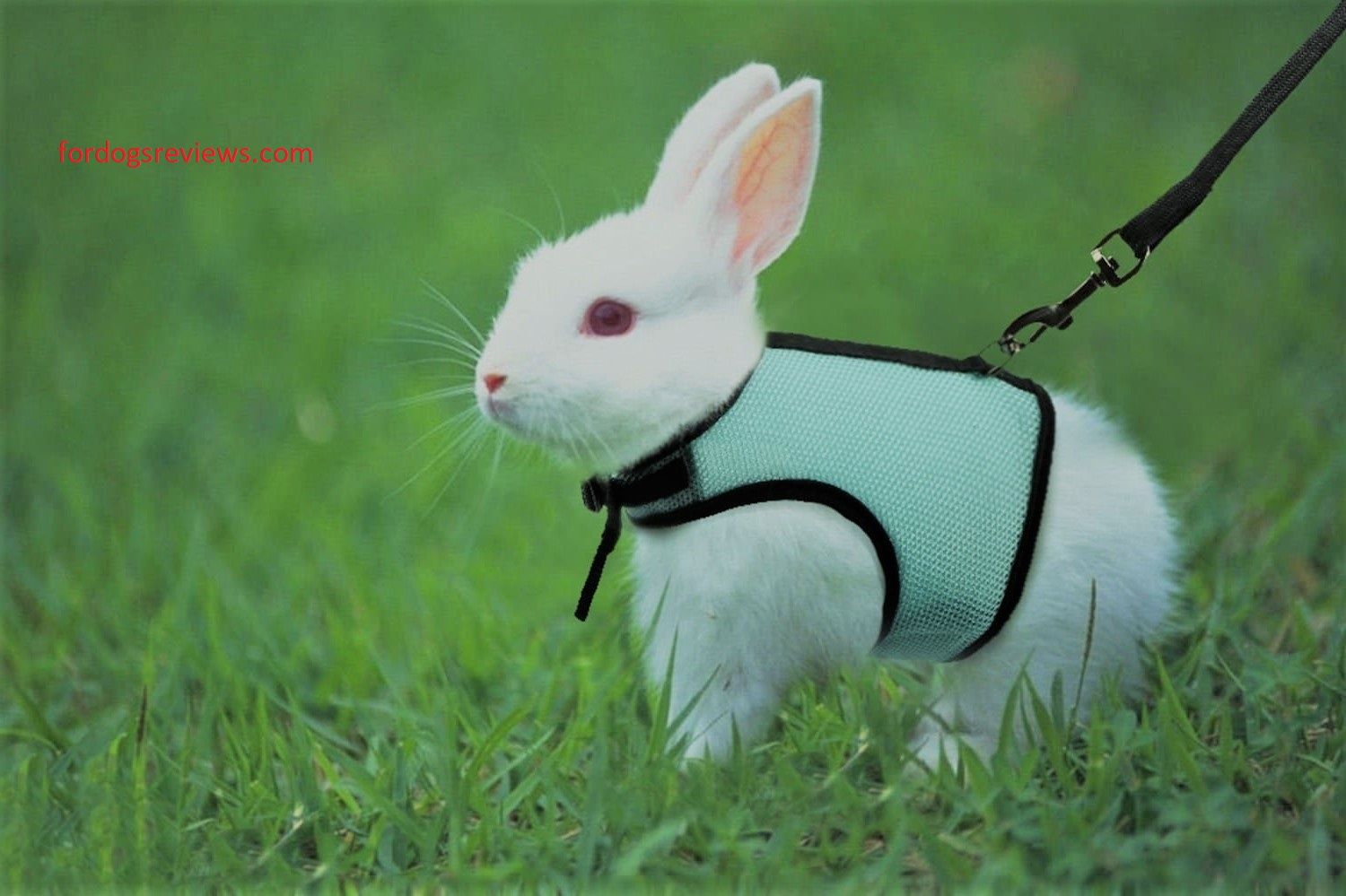 Best breathable bunny harness