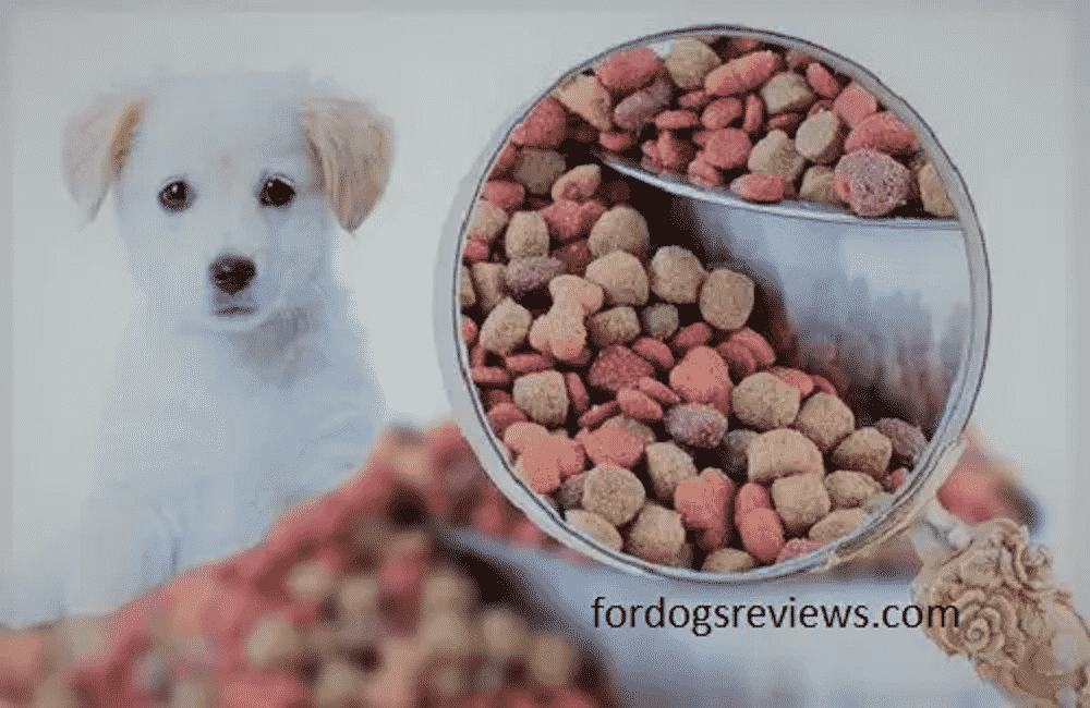 the best advice to choose food for your dogs