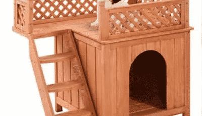 dog bunk beds
