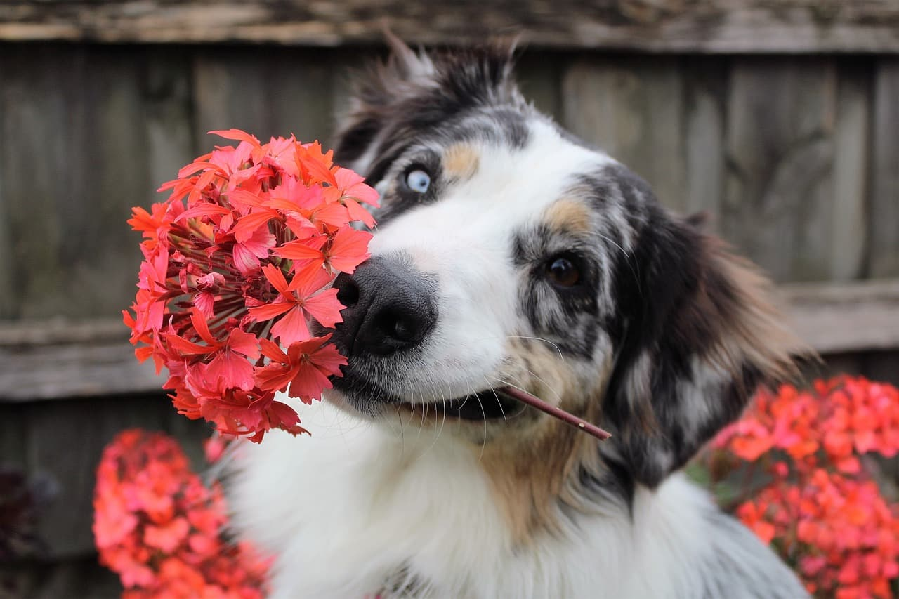 house plants poisonous to dogs