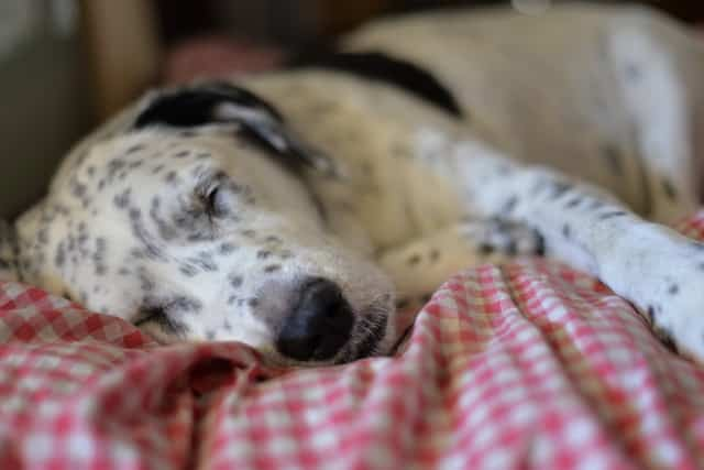 best dogs to sleep with