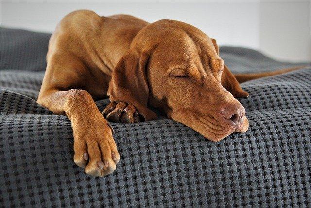 dog heavy breathing at night
