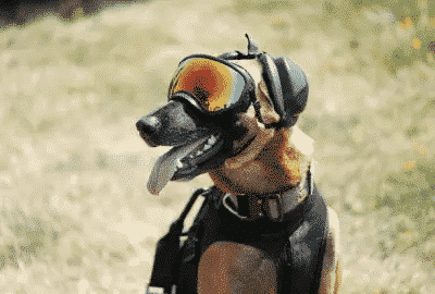 hunting dog ear protection