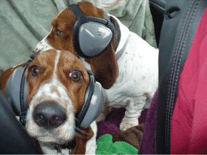 hunting dog ear protection