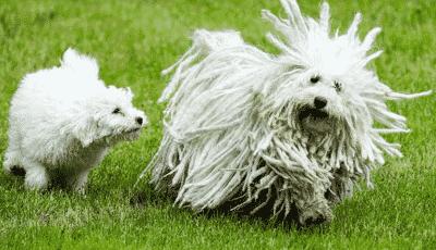 the weirdest dog