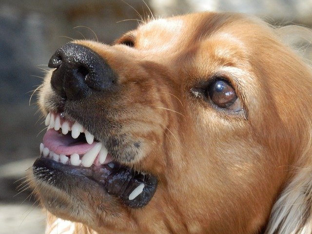 what are signs of aggression in dogs