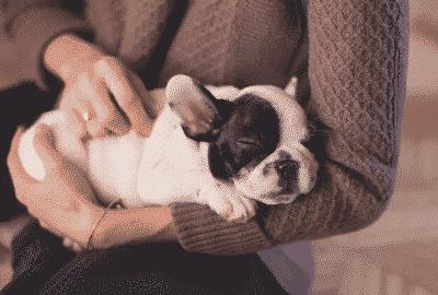 when do puppies start sleeping through the night